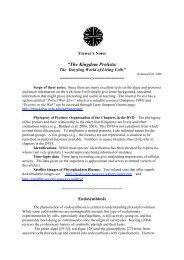 The Kingdom Protista - Cytographics