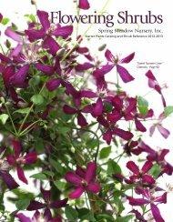 Flowering Shrubs - Spring Meadow Nursery
