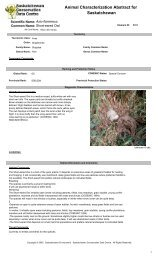 Short-eared Owl Asio flammeus - Saskatchewan Conservation Data ...