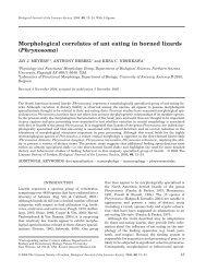 Morphological correlates of ant eating in horned lizards (Phrynosoma)