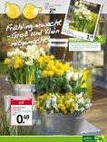Frühlings- grüsse - Heckert Gartencenter - Seite 3