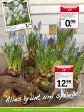 Frühlings- grüsse - Heckert Gartencenter - Seite 4