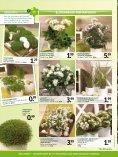 Frühlings- grüsse - Heckert Gartencenter - Seite 6