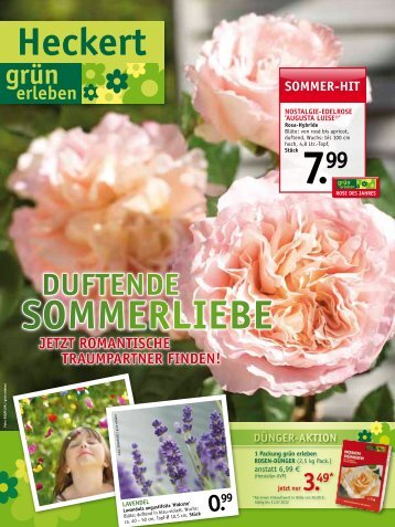 sommer-hit - Heckert Gartencenter