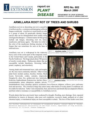 Armillaria Root Rot of Trees and Shrubs - Integrated Pest ...