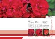 10 Alte-hist. u. seltene Rosen.indd - Rosen Waibel