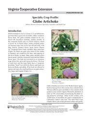 Globe Artichoke - Publications and Educational Resources - Virginia ...