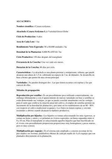 ALCACHOFA Nombre científico : Cynara scolymus. Alcachofa ...
