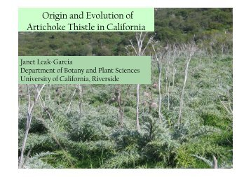 Origin and Evolution of Artichoke Thistle in California
