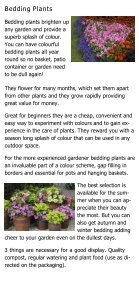 Bedding Plants - Golden Acres Nurseries - Page 2