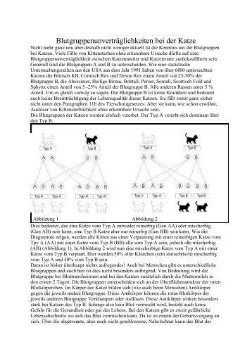 Blutgruppen bei Katzen