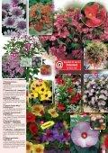 Garantiert - Gartenwelt Oppl - Seite 5