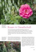 Rosen und Lavendel – ein unschlagbares Team - Wyss - Seite 3