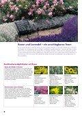 Rosen und Lavendel – ein unschlagbares Team - Wyss - Seite 4