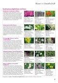 Rosen und Lavendel – ein unschlagbares Team - Wyss - Seite 5