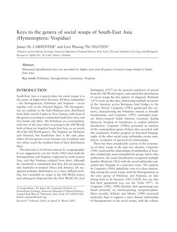 Keys to the genera of social wasps of South-East Asia ...
