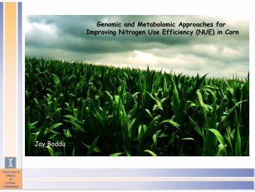 Genomic and Metabolomic Approaches for Improving Nitrogen Use ...