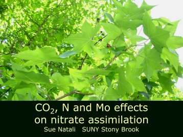 Not all nitrogen is created equal….nitrate assimilation under CO2 ...