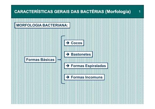 morfologia das bacterias