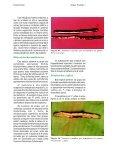 NEMATÓIDES - Ceinfo - Embrapa - Page 3