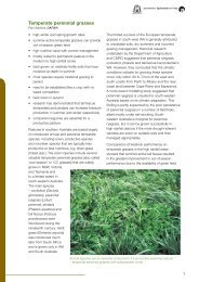 Temperate perennial grasses - Department of Agriculture and Food