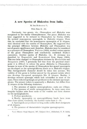 A new Species of Blakeslea from India.