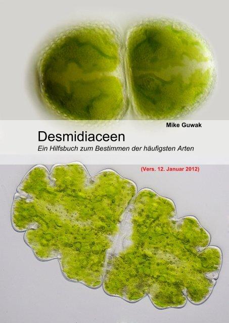 Desmidiaceen - Mikroskopfreunde-Nordhessen