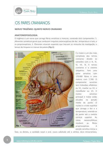 nervo trigêmio: quinto nervo craniano - Instituto Paulo Brito
