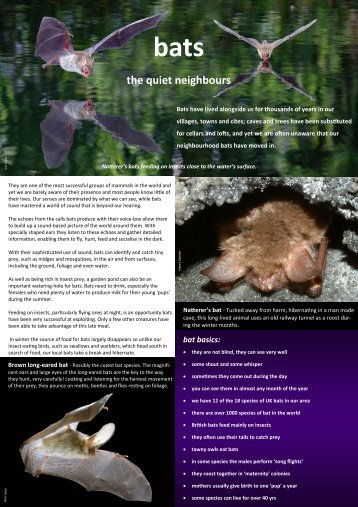 Introduction to local bats - The Wildlife Trust