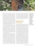 Morcegos e frutos - Ciência Hoje - Page 4