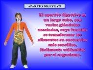 aparato-digestivo_alumnos