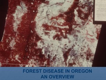 forest disease in oregon an overview - Oregon State University