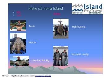 Fishing in northern Iceland, Swedish 2