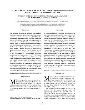 Etiología de la mancha negra del nopal (Opuntia ficus-indica Mill)
