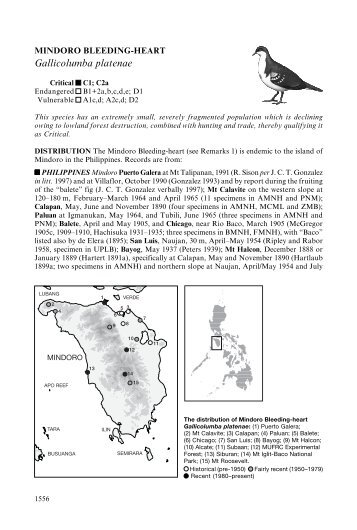 Gallicolumba platenae - BirdBase