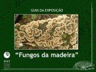 Fungos da madeira