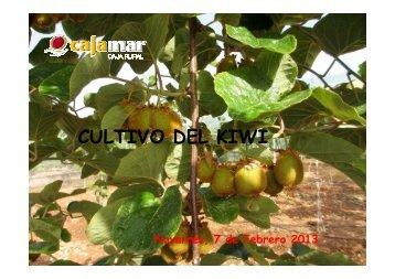 Cultivo del Kiwi.