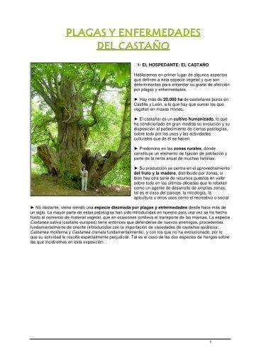 PLAGAS Y ENFERMEDADES DEL CASTAÑO - Afadc.es