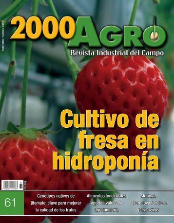 Cultivo de fresa en hidroponía - 3W México