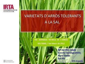 2 Varietats d'arròs tolerants a la salinitat - Recercat