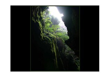 Conservação da Natureza no Sítio Rede Natura 2000 (Valongo ...