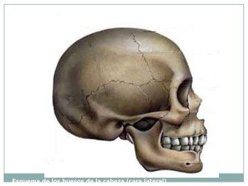 Esquema del hueso temporal - Apoyo para la Fac. de Odontología ...