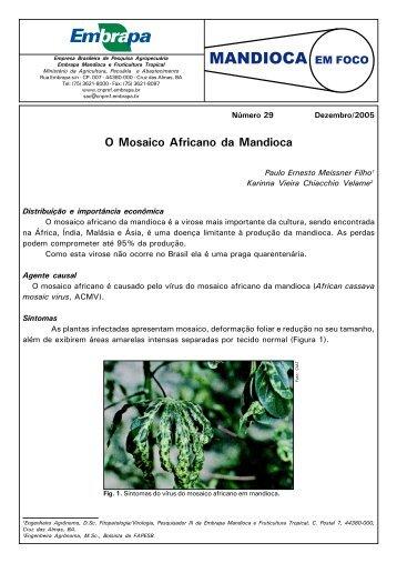 MANDIOCA EM FOCO - Embrapa Mandioca e Fruticultura