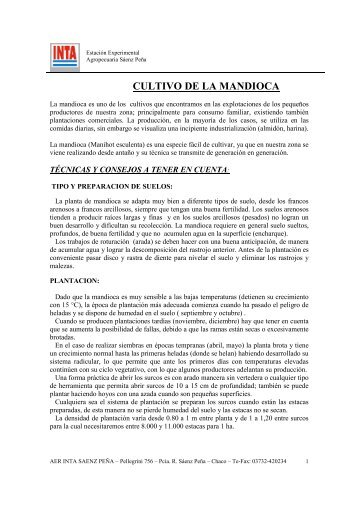 cultivo de la mandioca - INTA