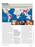 Melhorar a mandioca e alimentar os pobres - gene conserve - Page 3