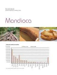 Mandioca - Alimentos Argentinos