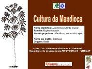 Aula sobre mandioca - Agroecologia