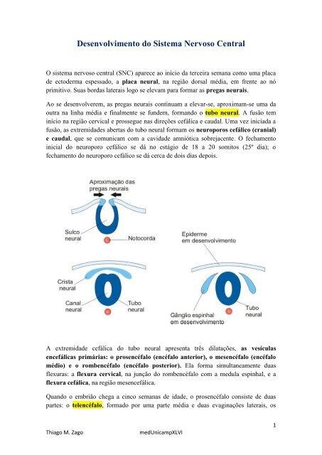 Pdf sistema nervoso
