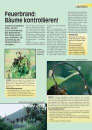 Feuerbrand - Bäume kontrollieren - Agroscope