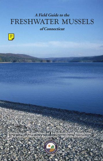A Field Guide to the Freshwater Mussels of Connecticut - CT.gov